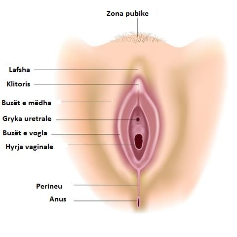 Anatomia e vagines shqip 1