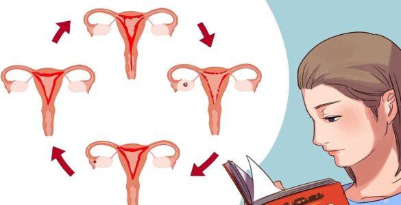 cikli menstrual